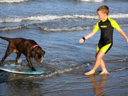 Mon, 5 Mar 2007: Home in New Zealand, The Surfing Dog